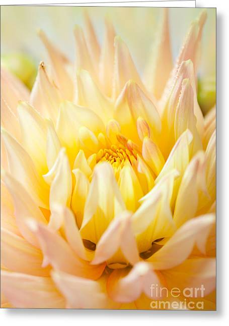 Dahlia Flower 10 Greeting Card by Nailia Schwarz