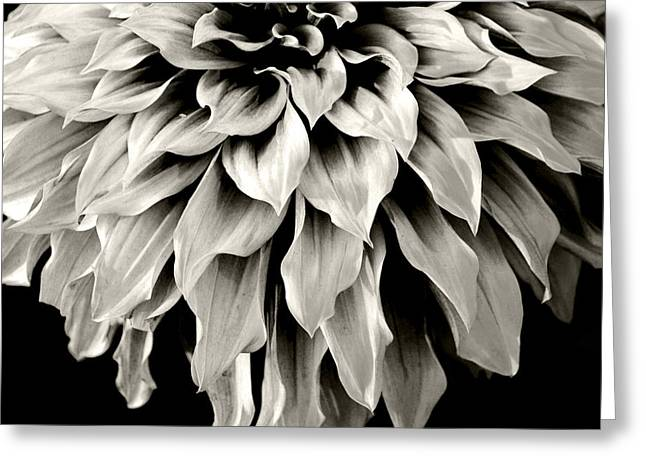 Dahlia Flower  Greeting Card