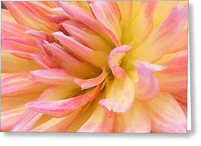 Dahlia Glow Greeting Card