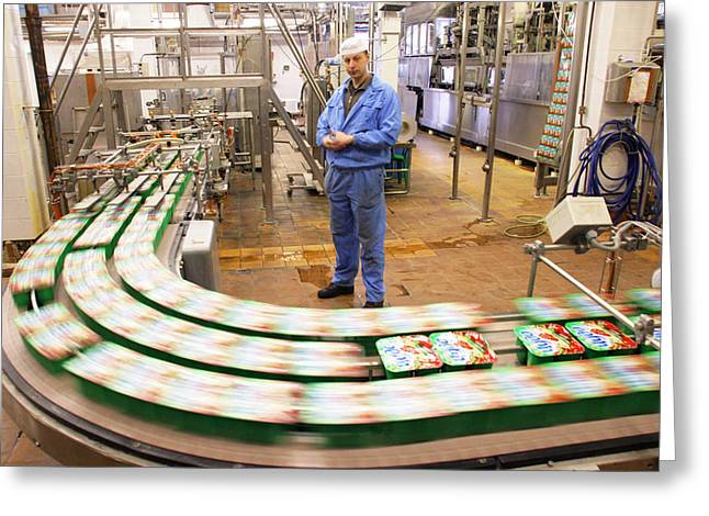 Dairy Factory Production Line Greeting Card by Ria Novosti
