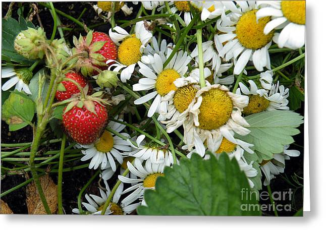 Daisies And Strawberries Greeting Card by Vicky Tarcau
