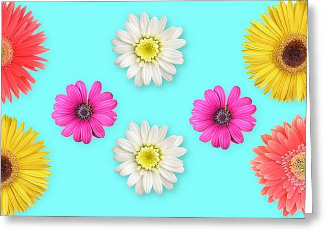 Daisies On Blue Greeting Card