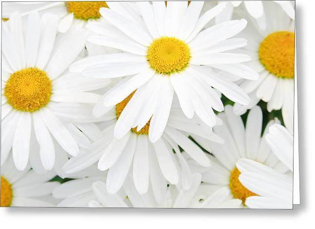 Daisy Background Greeting Card by Amanda Elwell