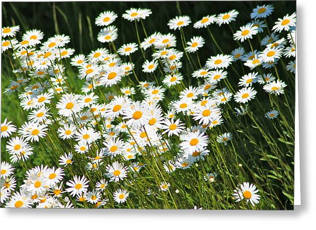 Daisy Day's Greeting Card by Karen Grist
