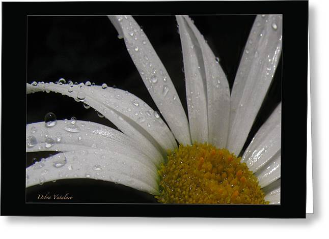 Daisy Drops Greeting Card by Debra     Vatalaro