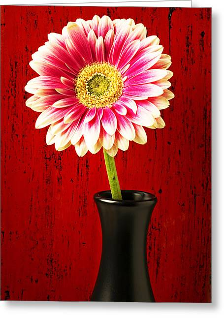 Daisy In Black Vase Greeting Card by Garry Gay