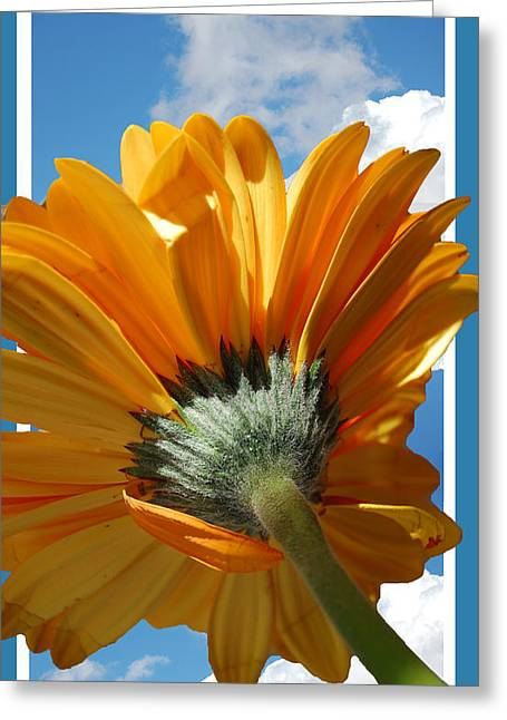 Daisy In The Sky Greeting Card by Rozalia Toth