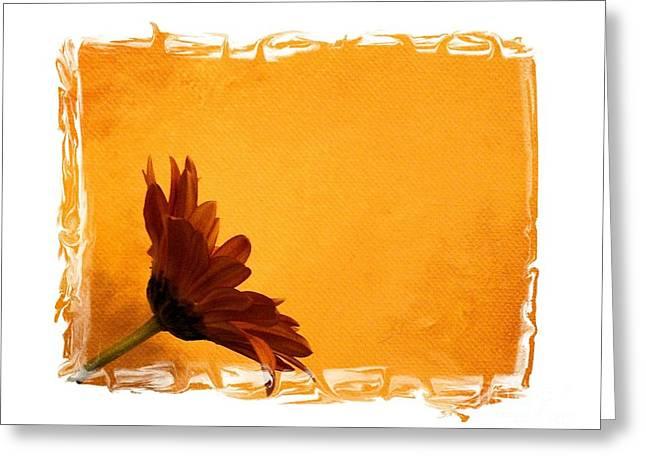 Daisy In The Yellow Corner Greeting Card by Marsha Heiken