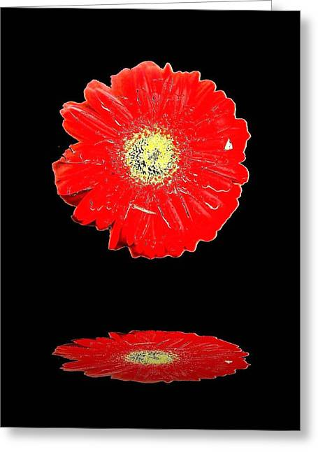 Greeting Card featuring the photograph Daisy Reflection by Carolyn Repka