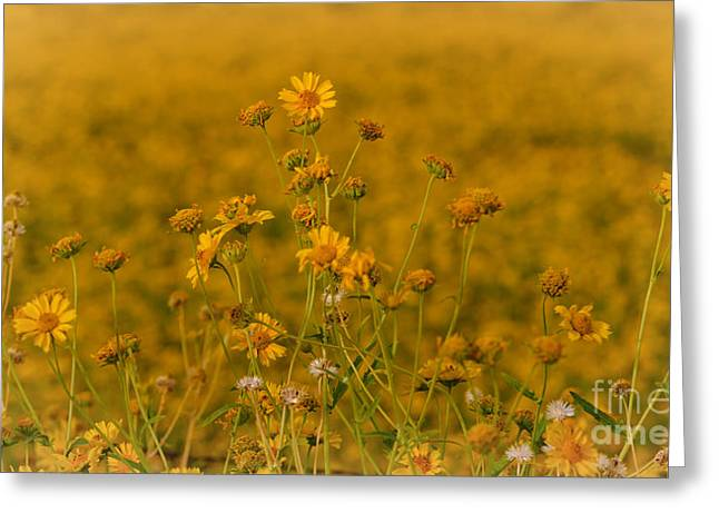 Daisy's Greeting Card by Donna Greene