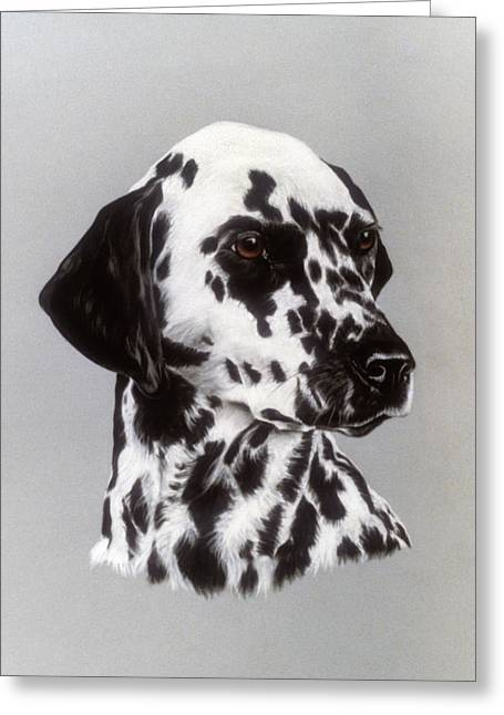 Dalmatian Greeting Card by Patricia Ivy