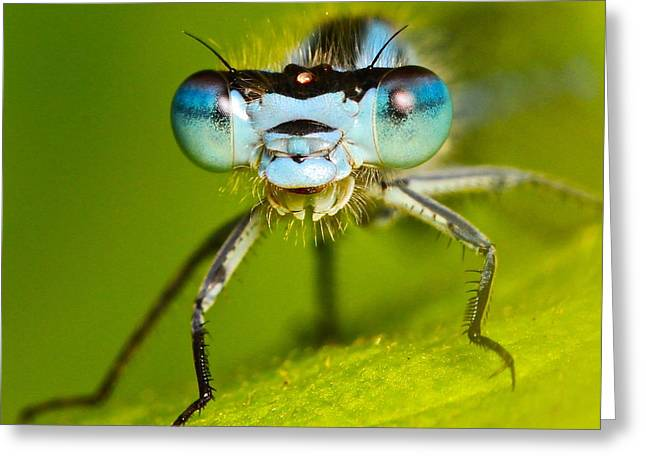 Damselfly Portrait Greeting Card by Ronald Monong