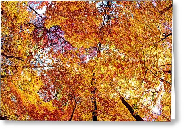 Dance Of The Autumn Trees Greeting Card by Kimberleigh Ladd