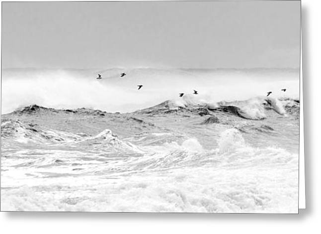 Dancing Above The Waves Greeting Card by Michelle Wiarda
