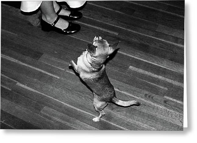 Greeting Card featuring the photograph Dancing Dog  by Atom Crawford