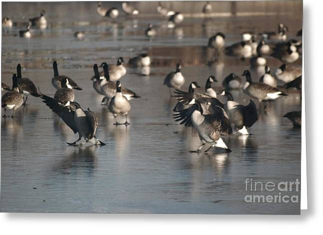 Greeting Card featuring the photograph Dancing Geese by Mark McReynolds