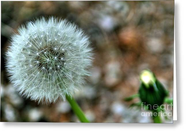 Greeting Card featuring the photograph Dandelion by Adrian LaRoque