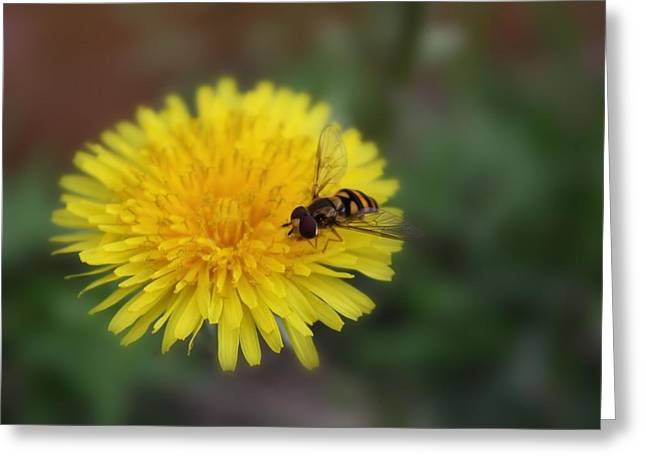 Greeting Card featuring the photograph Dandelion For Dinner by Lynnette Johns