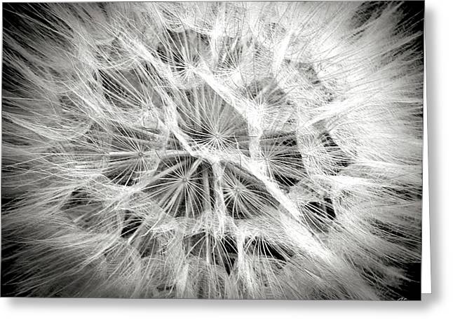 Dandelion In Black And White Greeting Card by Endre Balogh