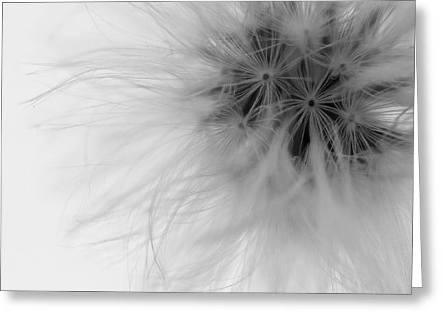 Dandelion Macro Greeting Card by Zoe Ferrie