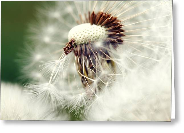 Dandelion No1 Greeting Card