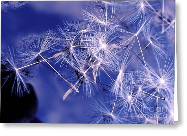 Dandelion Seeds Floating On Water Greeting Card by Kaye Menner