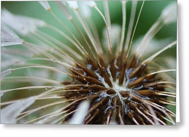 Dandelion Tears Greeting Card by Paul Ward