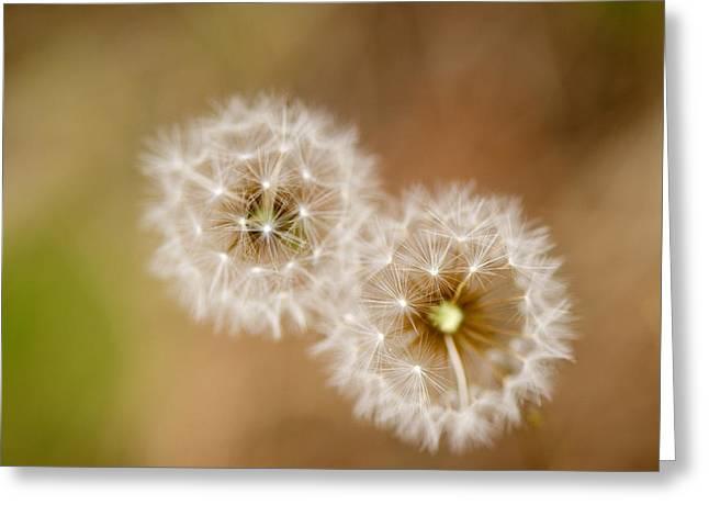 Dandelions Greeting Card by Perry Van Munster