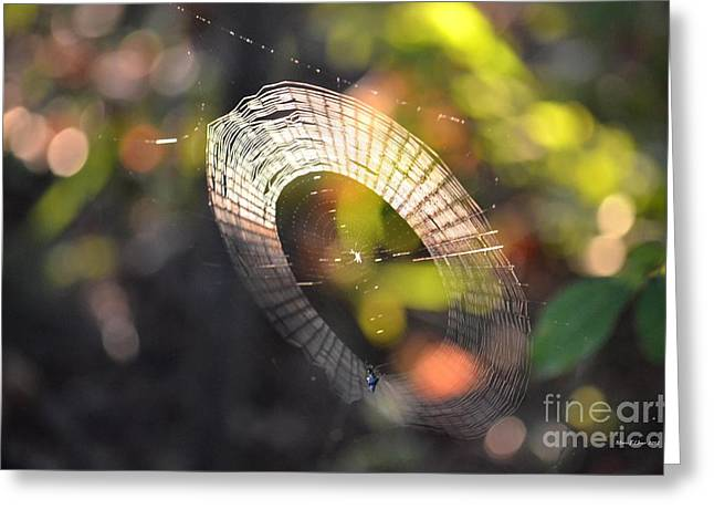 Dappled Web Of Deceit Greeting Card by Maria Urso