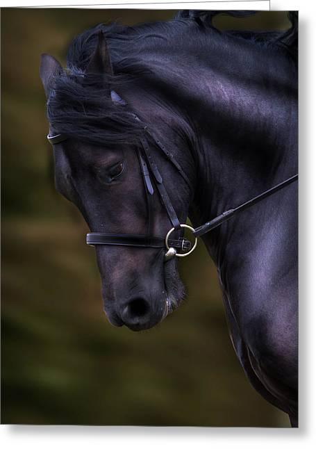 Dark Bay Horse Head Greeting Card