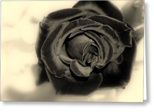 Greeting Card featuring the photograph Dark Beauty by Kay Novy