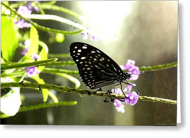 Dark Blue Tiger Butterfly In The Rain Greeting Card