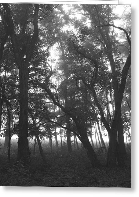 Greeting Card featuring the photograph Dark  Shadows II by Penny Hunt