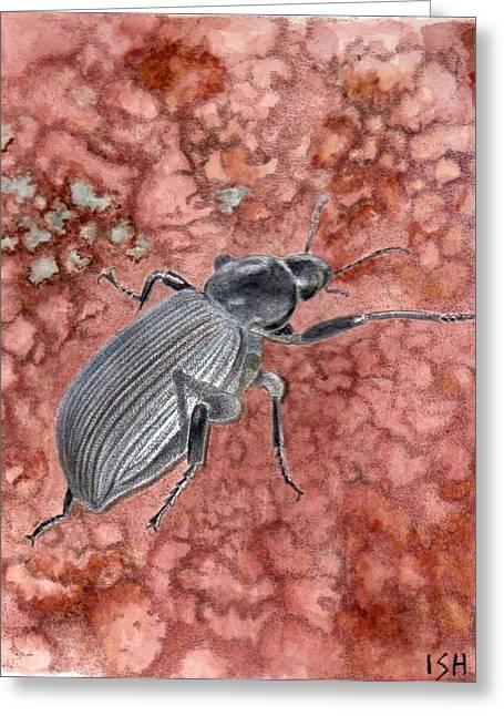 Darkling Beetle Greeting Card