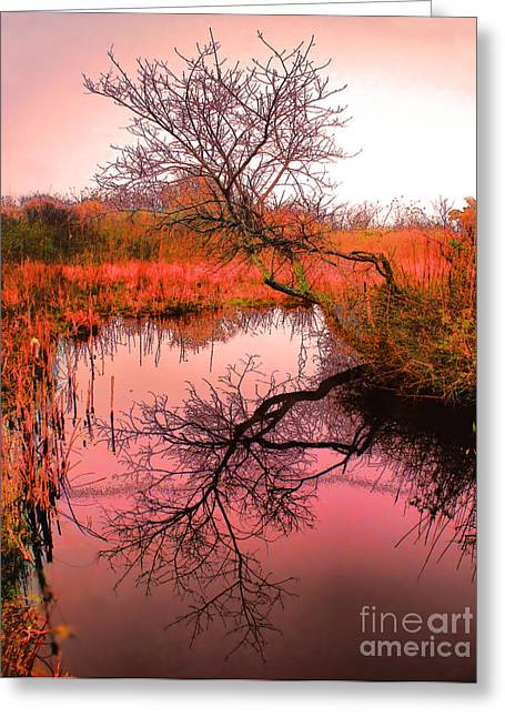 Dawn On The Marsh Greeting Card by Nick Zelinsky