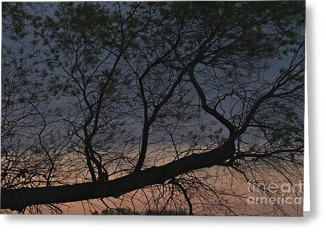 Greeting Card featuring the photograph Dawn by William Norton