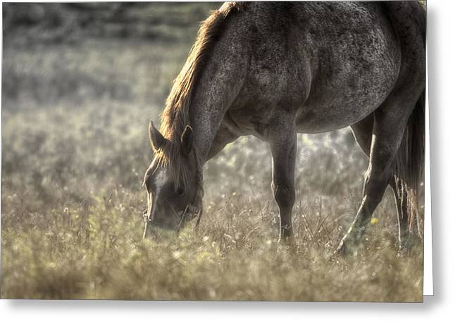 Day Graze Greeting Card by Gary Smith