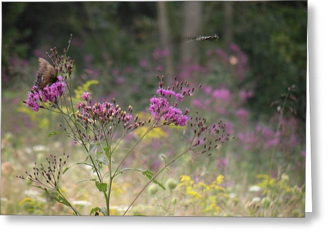 Day In The Meadow Greeting Card by Trendle Ellwood