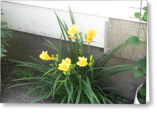 Day Lilies Greeting Card by Amy Bradley