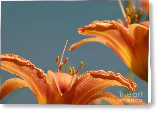 Day Lilies Greeting Card by Christine Stack