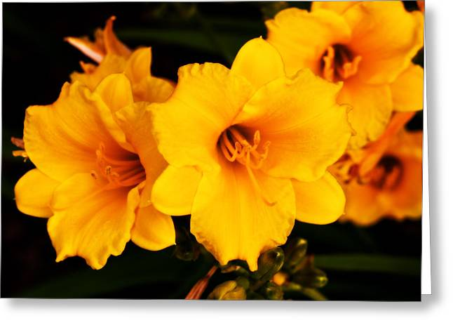 Day Lilly 1 Greeting Card by Barry Jones