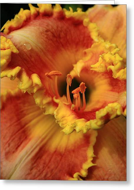 Day Lilly I Greeting Card