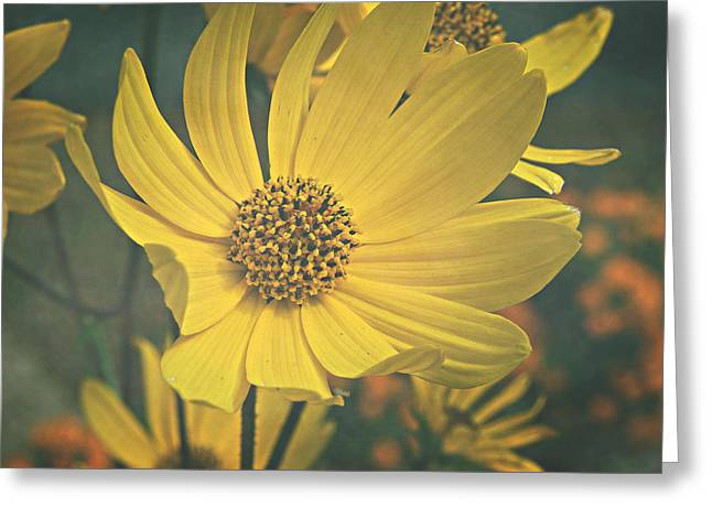 Greeting Card featuring the photograph Daydreaming Is Free by Robin Dickinson