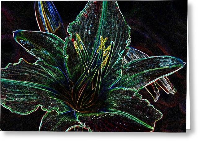 Daylilly Greeting Card by Phil Huettner