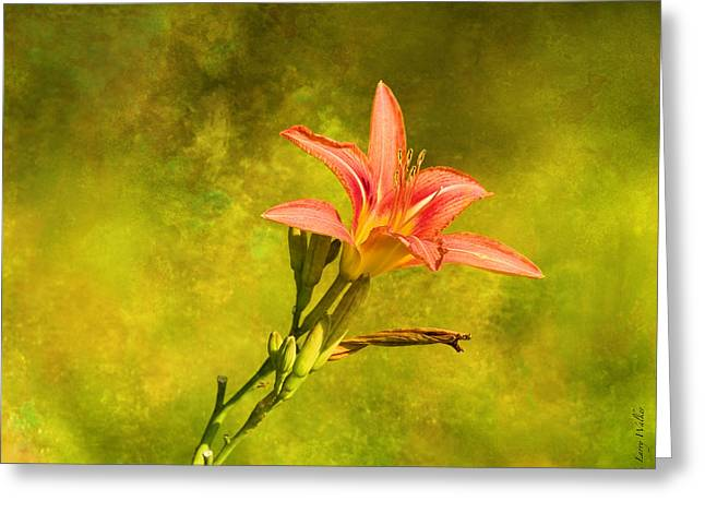 Daylily All Alone Greeting Card by J Larry Walker