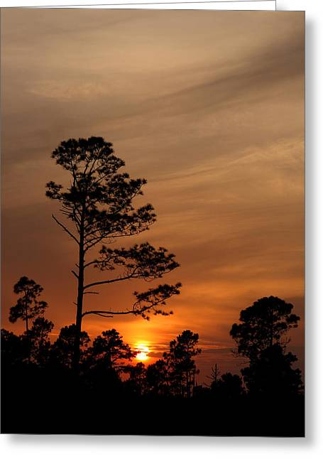 Greeting Card featuring the photograph Days Dusk by Cindy Haggerty