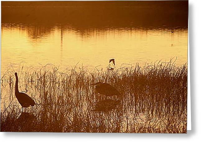 Days End At The Wetlands Greeting Card