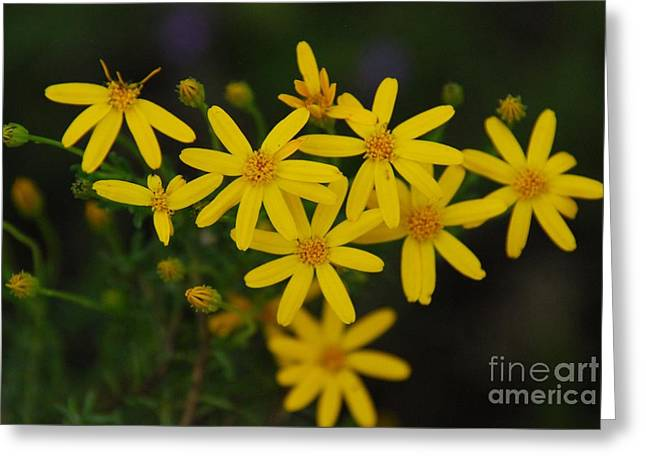 Greeting Card featuring the photograph Dbg 041012-0281 by Tam Ryan