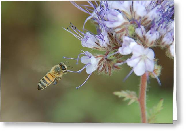 Greeting Card featuring the photograph Dbg 041012-0310 by Tam Ryan
