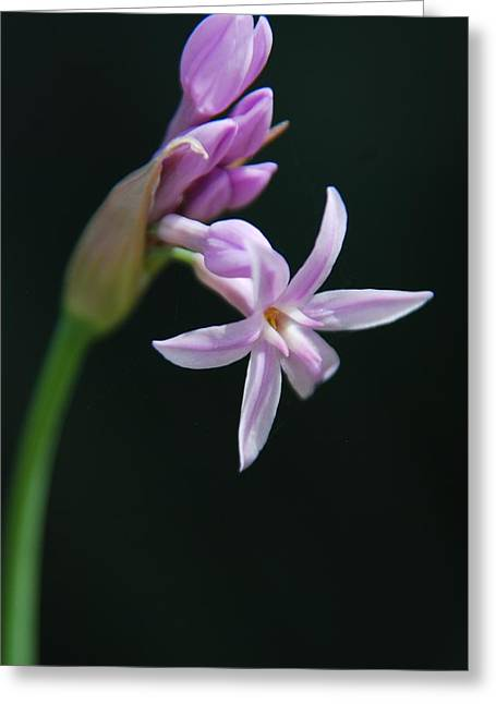 Greeting Card featuring the photograph Flowering Bud by Tam Ryan